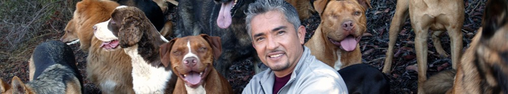 The Dog Whisperer TV Show Banner