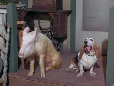 Green Acres - 03x03 Love Comes to Arnold Ziffel