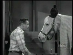 Mister Ed Ed's Cold Tail