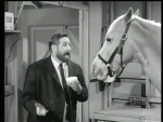 Mister Ed Whiskers and Tails
