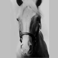Mister Ed played by Allan Lane