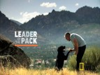 Cesar Millan's Leader of the Pack TV Show