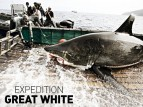 Expedition Great White TV Show