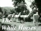 The White Horses (YU) (Dubbed) tv show photo