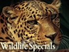 The Wildlife Specials (UK) TV Show
