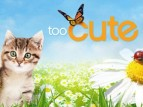 Too Cute TV Show