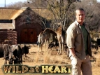 Wild at Heart (UK) TV Series
