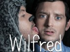 Wilfred tv show photo