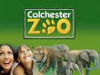 Zoo Days (UK) TV Series