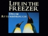 Life in the Freezer (UK) TV Show