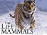 The Life of Mammals (UK) TV Show