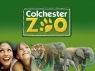 Zoo Days (UK) TV Show